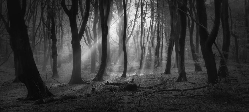 Fotokonst Black Magic