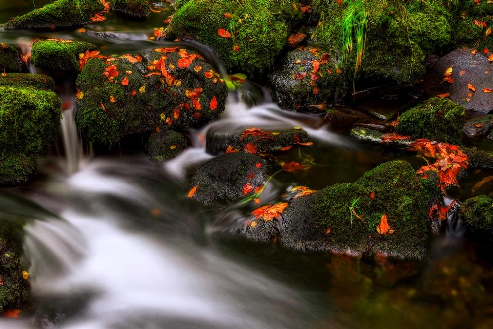 Poster Autumn Melodies