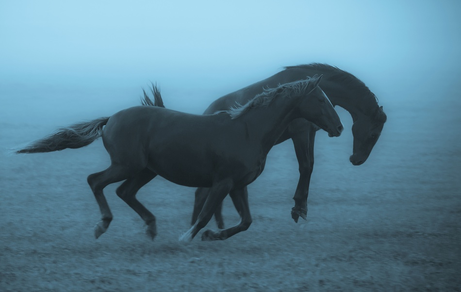 Poster Horses in the fog
