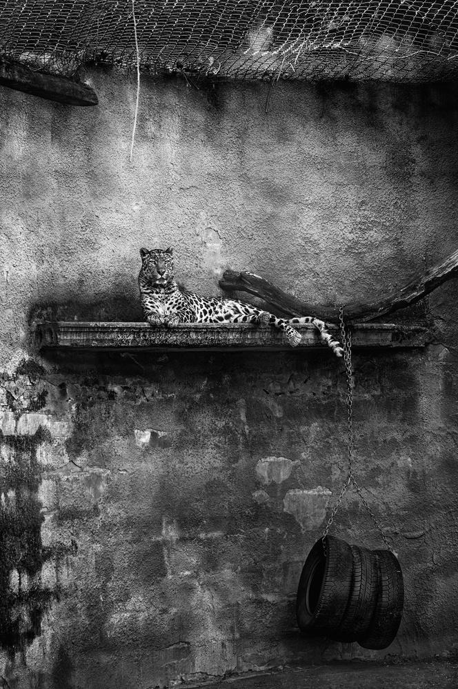 Fotokonst Captivity