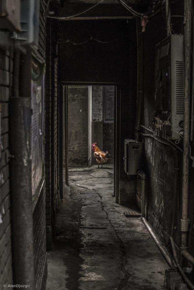 Fotokonst Rooster