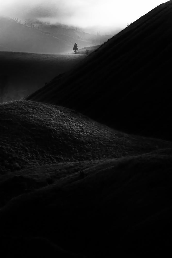Fotokonst alone