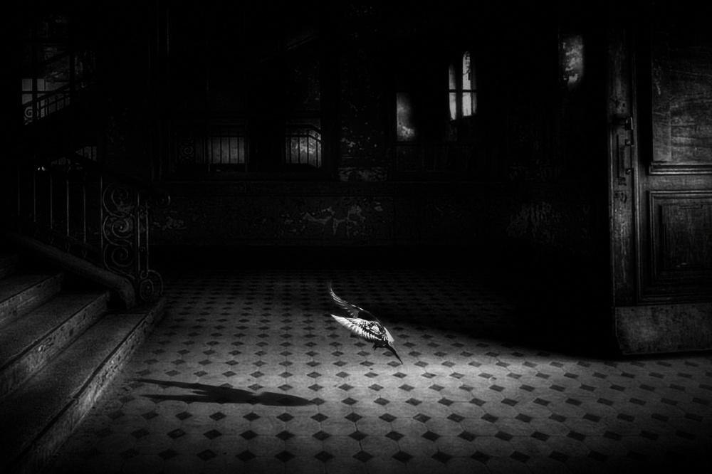 Fotokonst chance encounter
