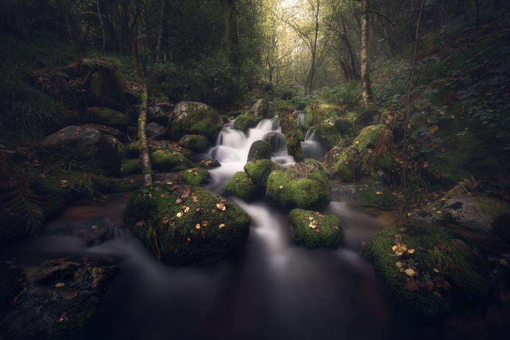Fotokonst Magical forest