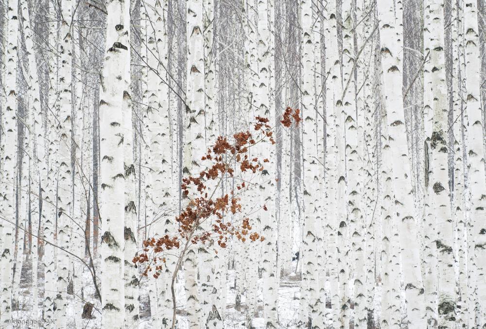 Fotokonst From White