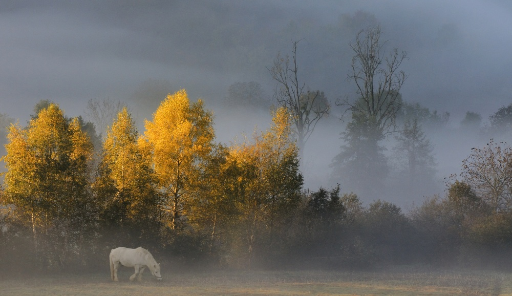 Poster white horse in autumn