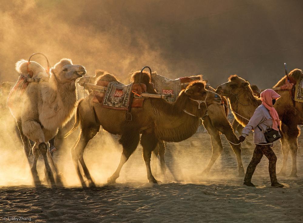 Fotokonst Camel station