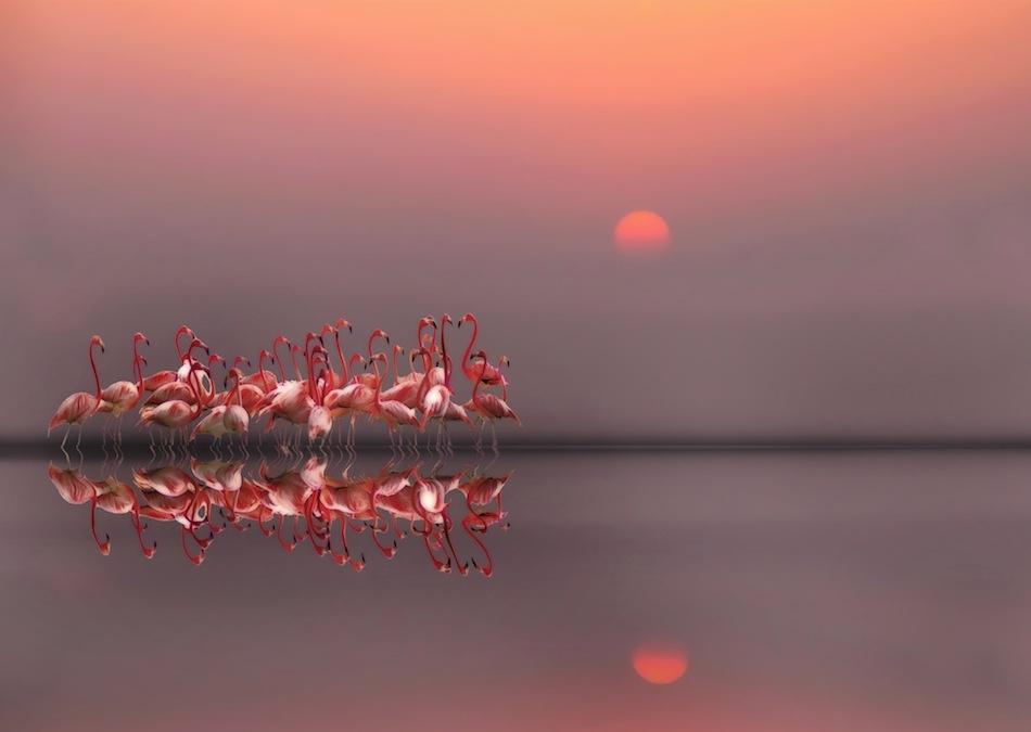 Fotokonst purple sunset