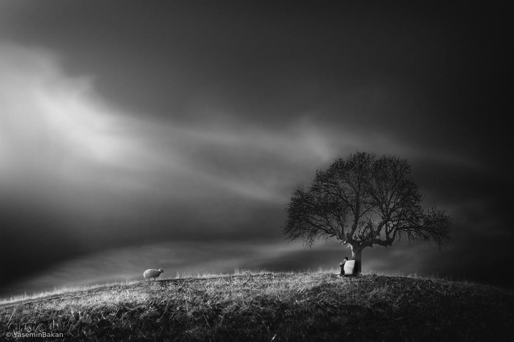 Fotokonst shepherd