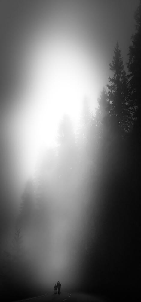 Fotokonst Walking in the forest