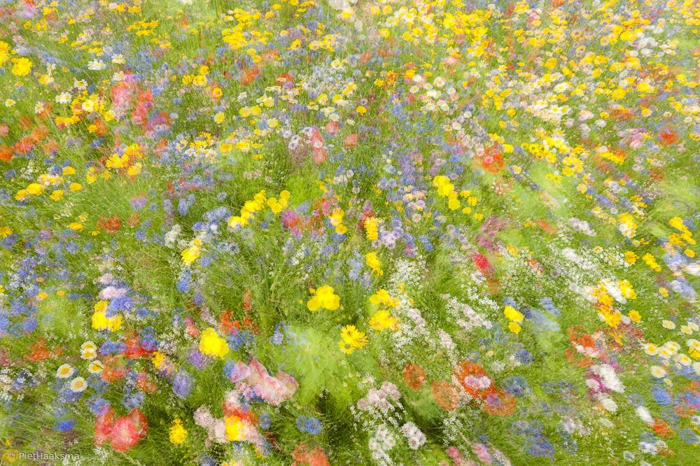 Fotokonst Summer field flowers..........