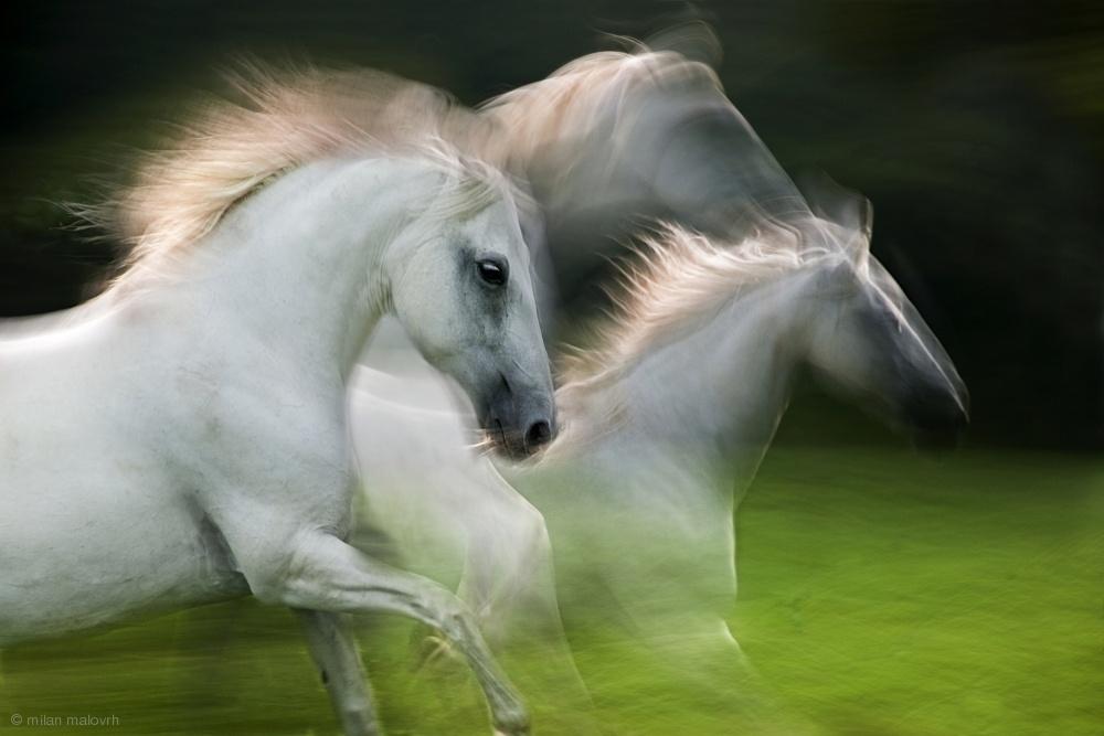 Fotokonst fly in the wind