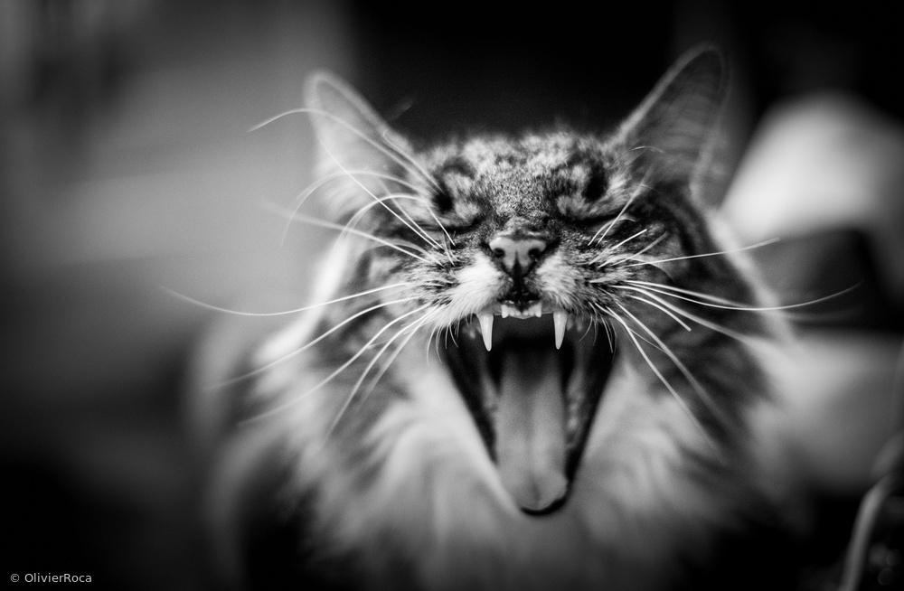 Fotokonst Hear me meow