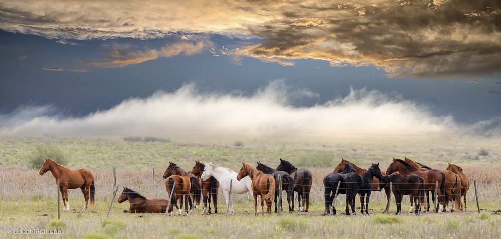 Fotokonst Horses