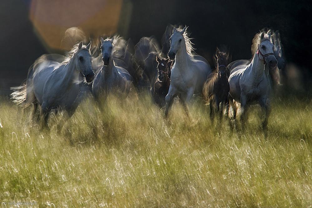 Fotokonst gallop across the meadow