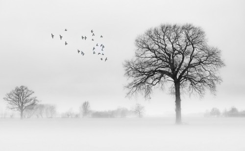 My winter land by Jacob Tuinenga