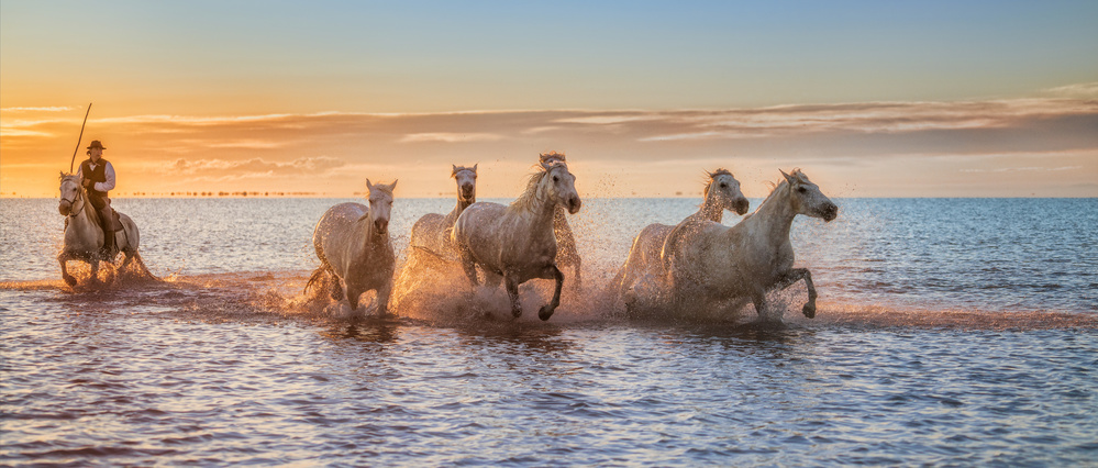 Fotokonst Camargue Horses II