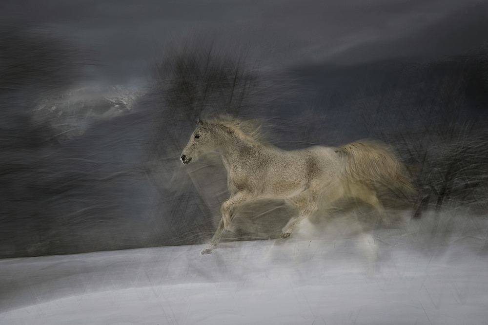 Poster Gallop in the Snow