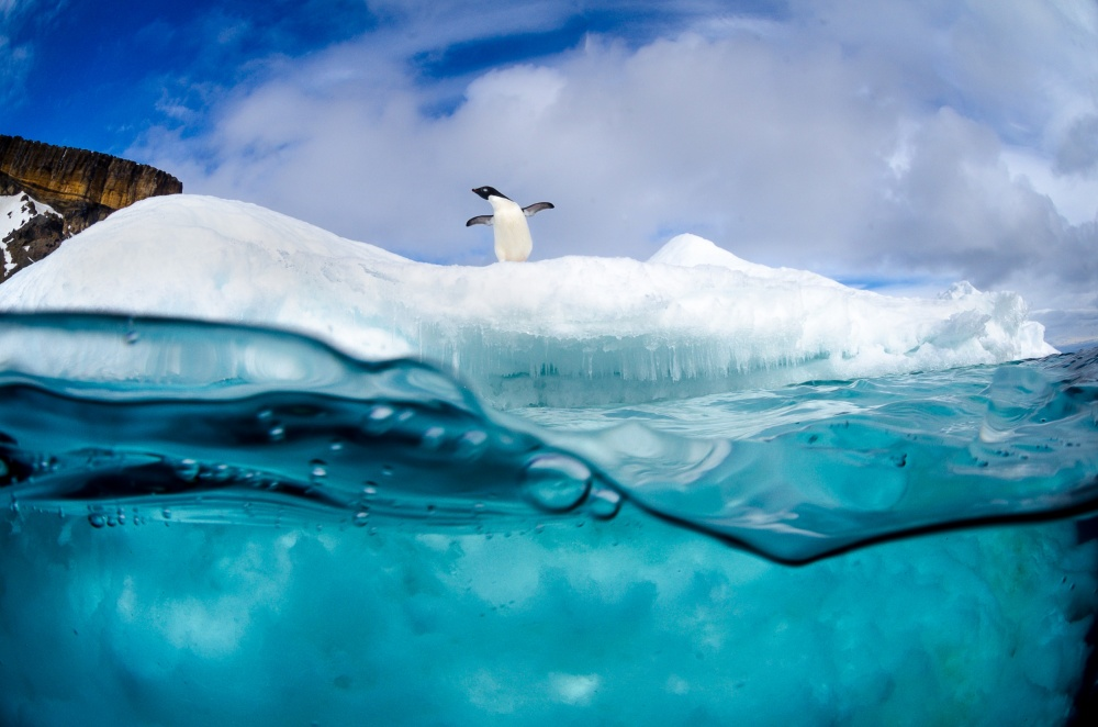 Poster Adelie penguin on iceberg
