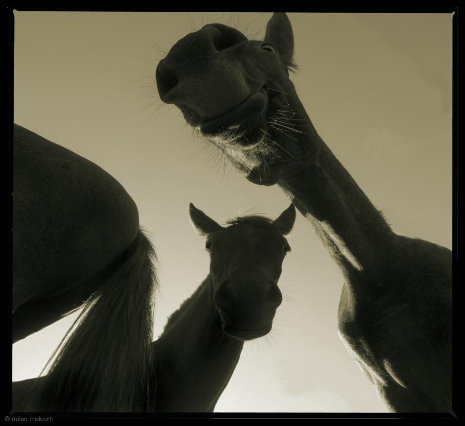 Fotokonst Fancy horses