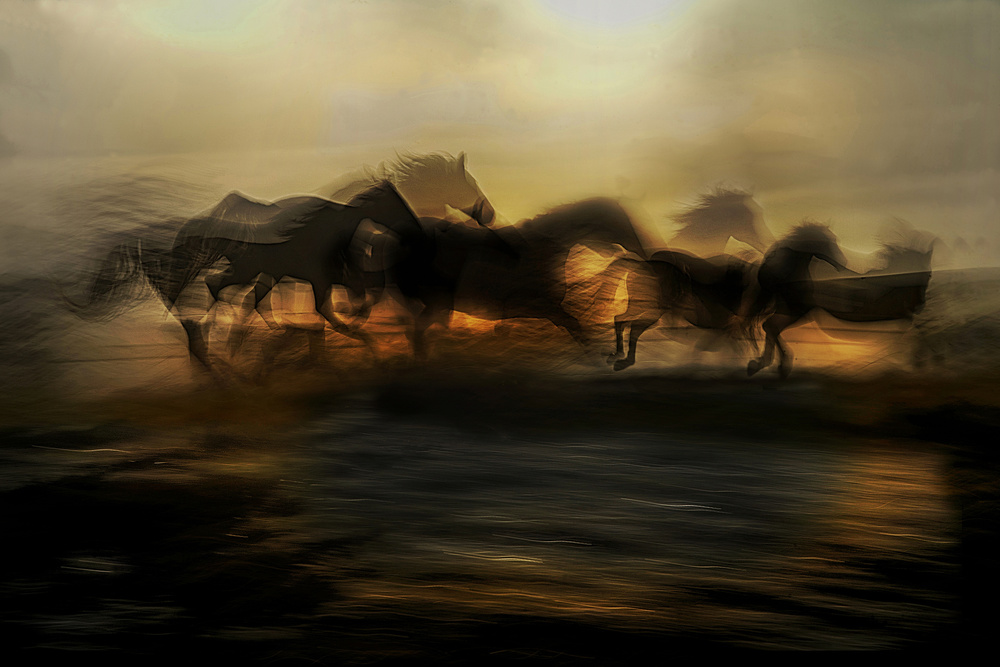 Fotokonst In the morning gallop
