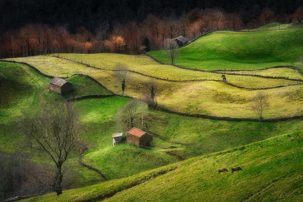 Fotokonst Rural Life