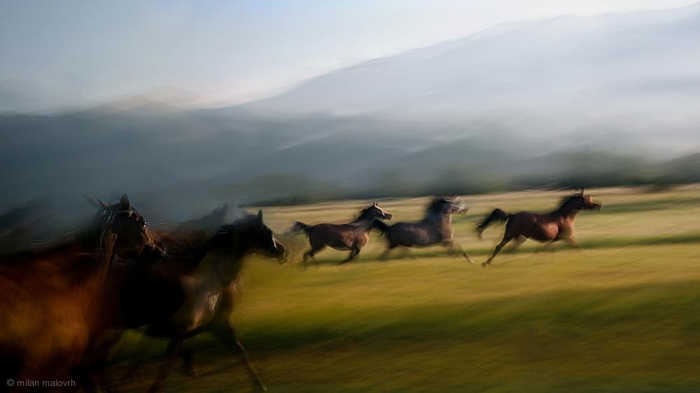 Fotokonst Free gallop