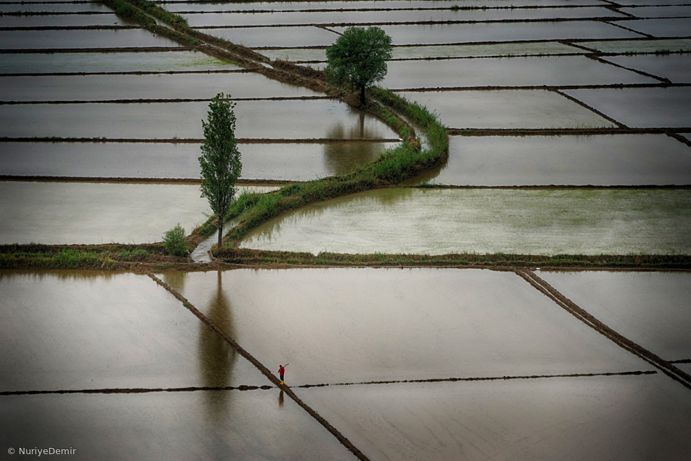 Fotokonst Ricefields