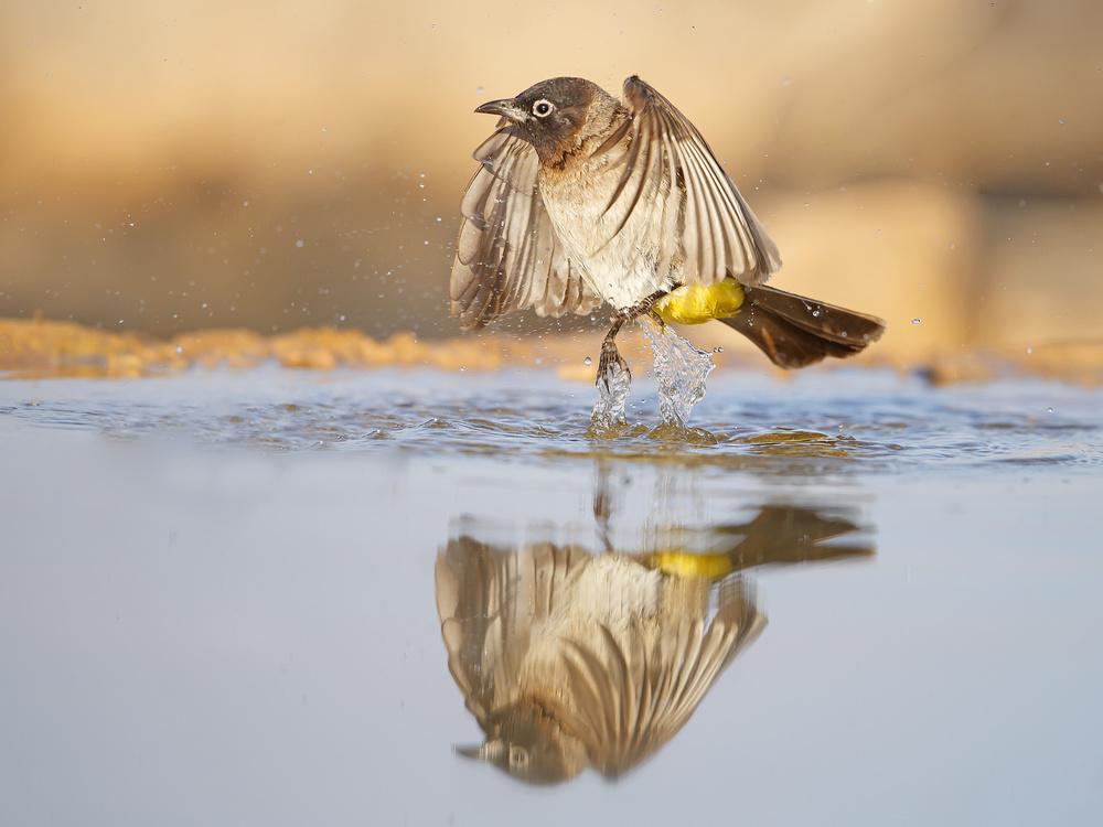 Fotokonst Bulbul