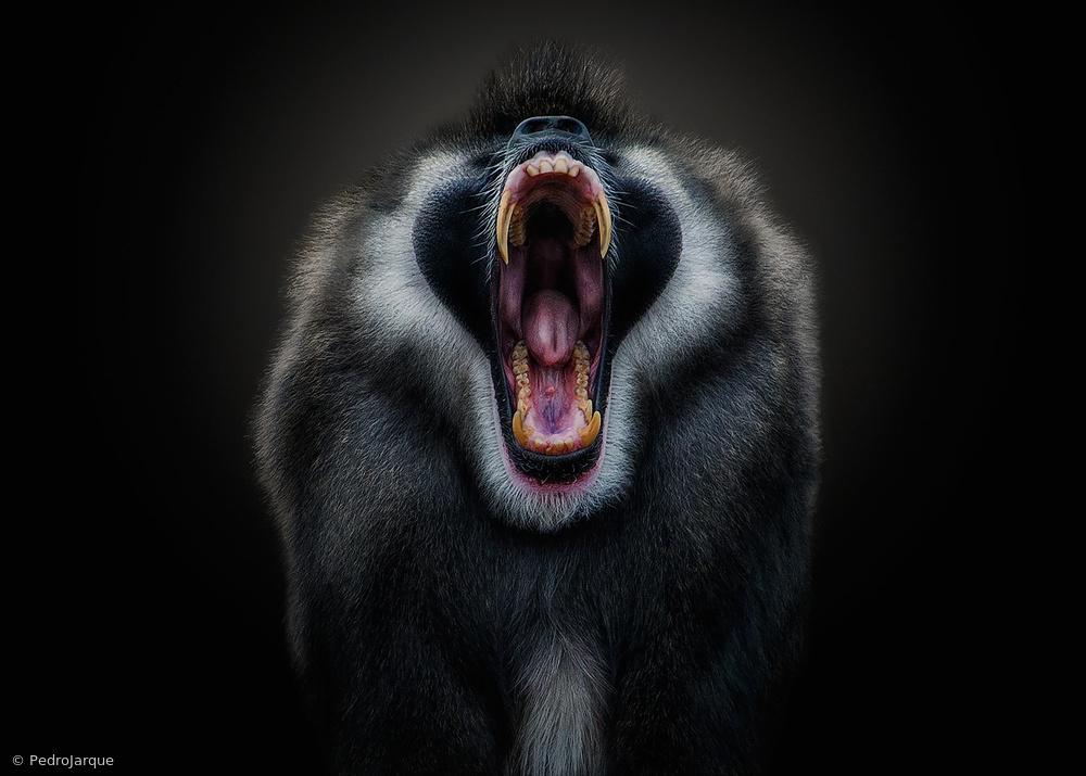 Poster The Scream