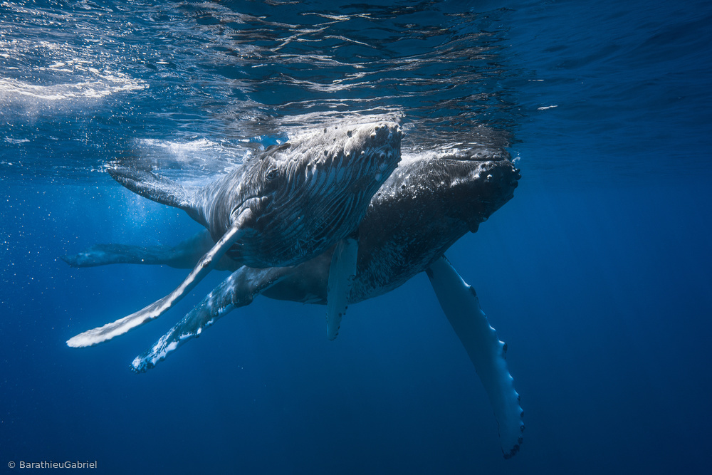 Fotokonst Humpback whale