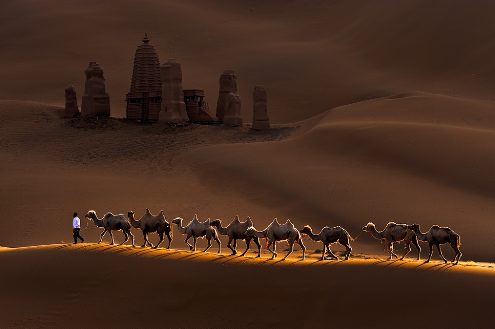 Castle and Camels