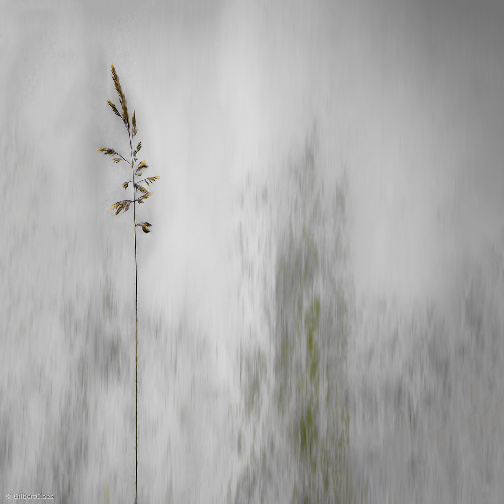 Fotokonst blade of grass