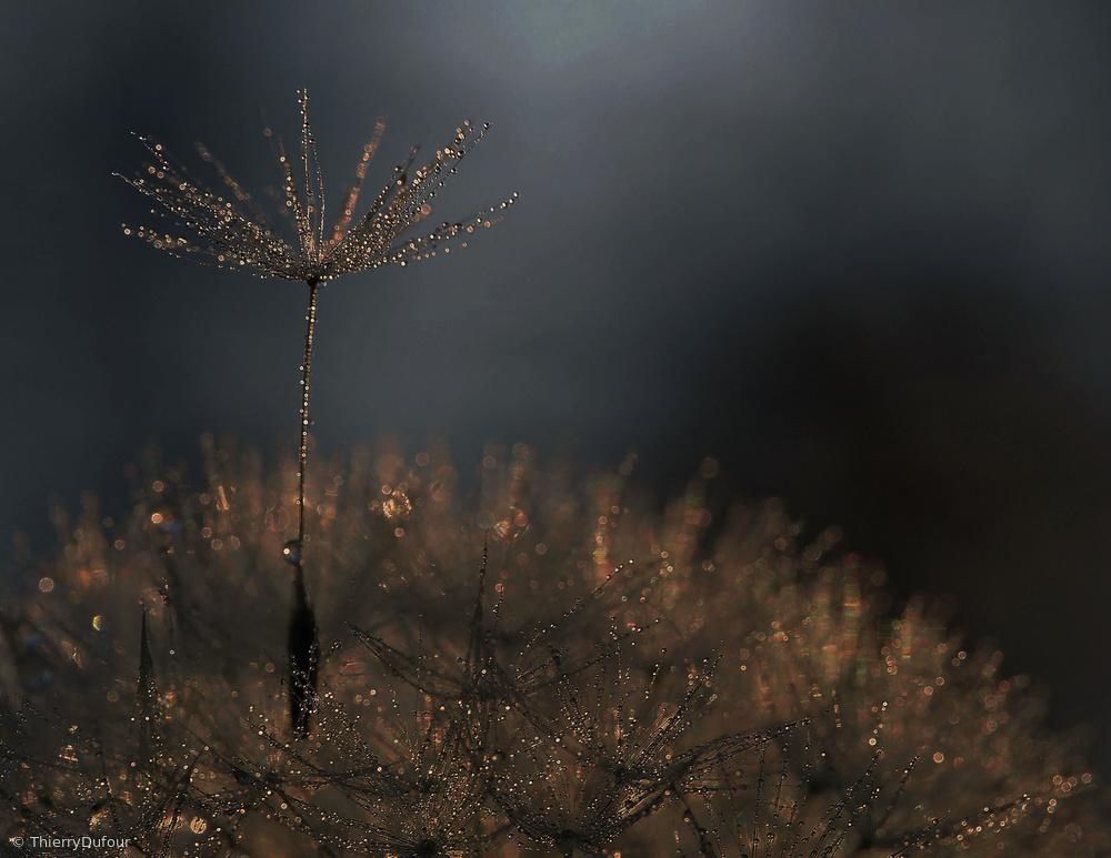 Fotokonst Standing toward the light...