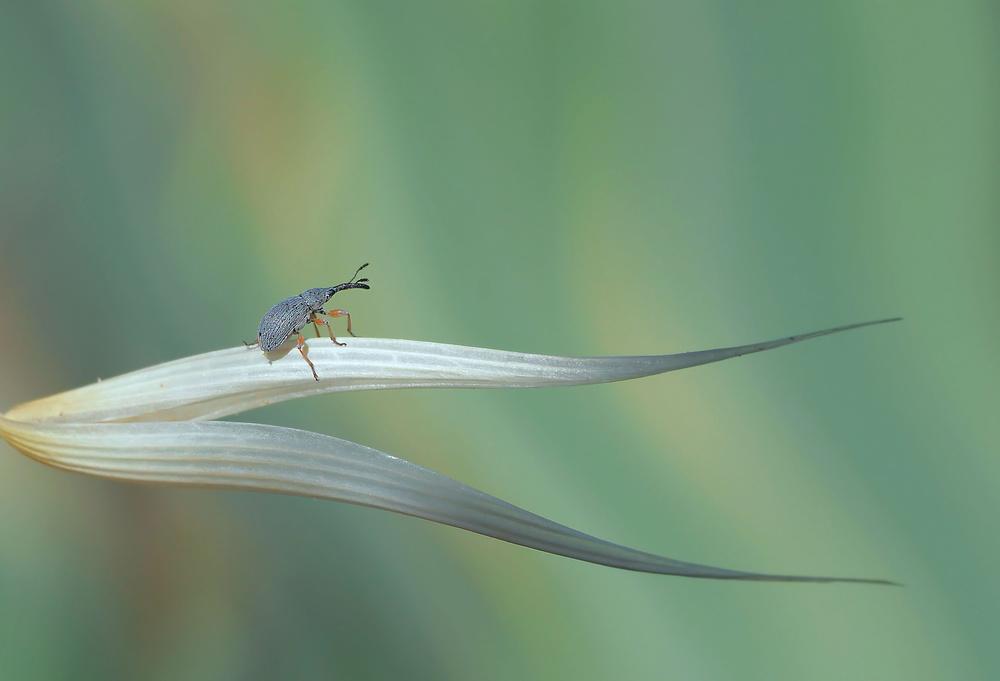 Fotokonst Dragon hunter...