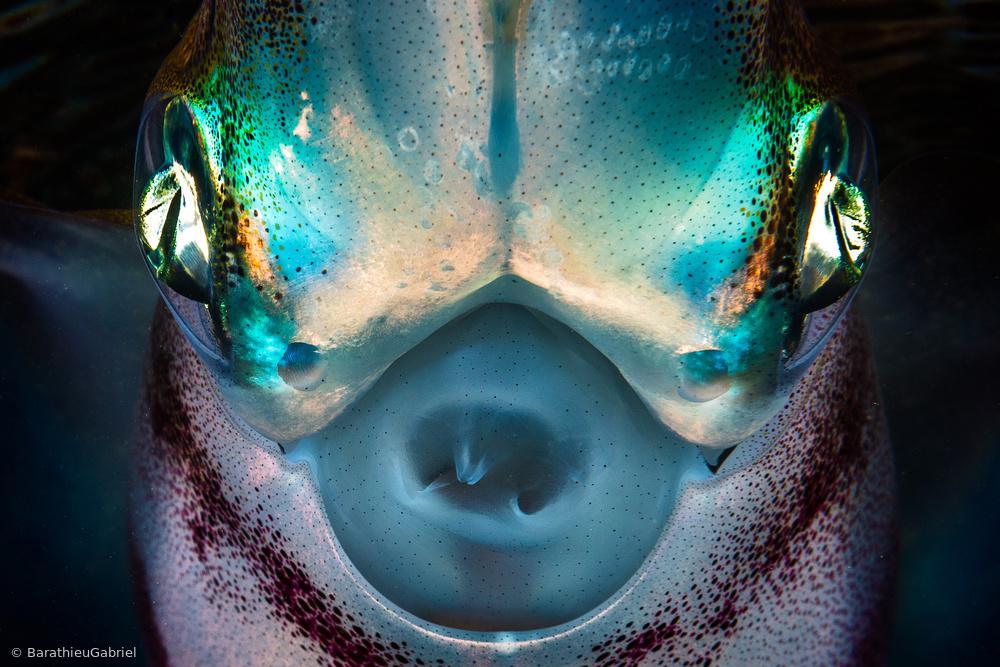 Fotokonst Squid detail
