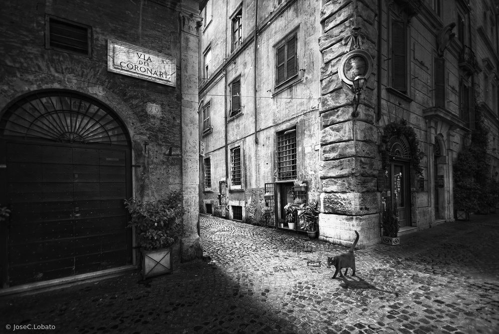 Fotokonst A roman cat
