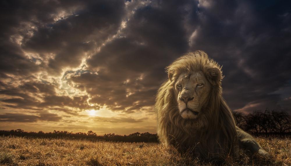 Fotokonst Adventures on Savannah - The Lion King