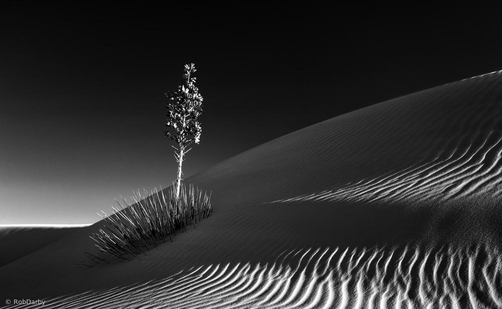 Fotokonst Undeterred