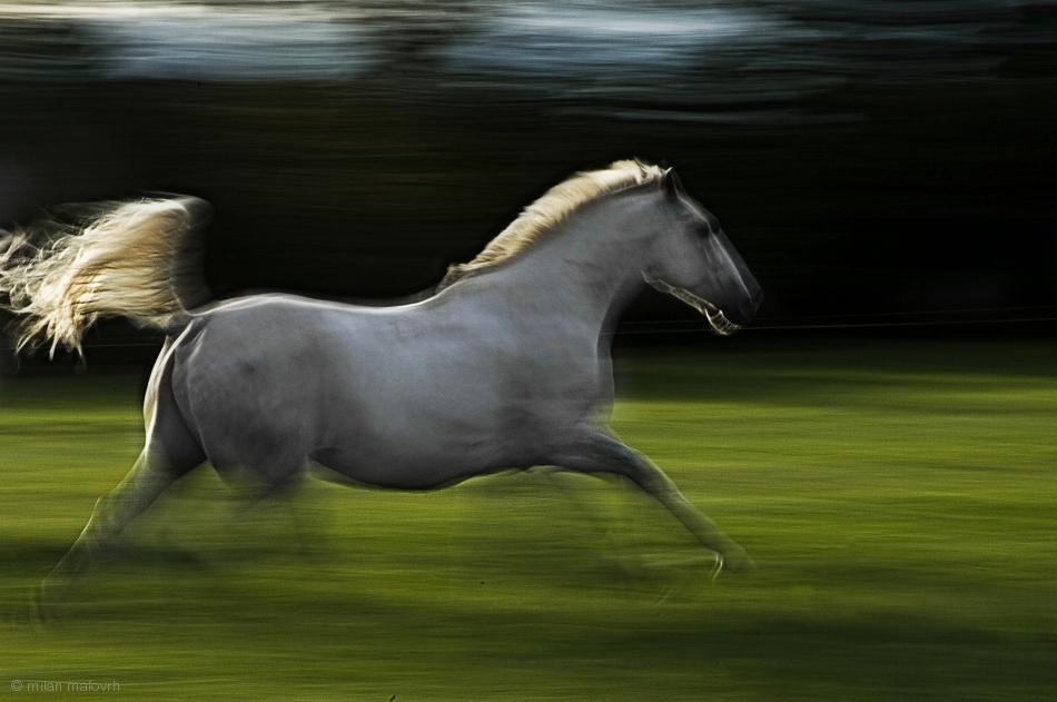 Fotokonst Winged horse