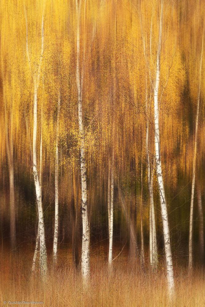 Fotokonst Autumn
