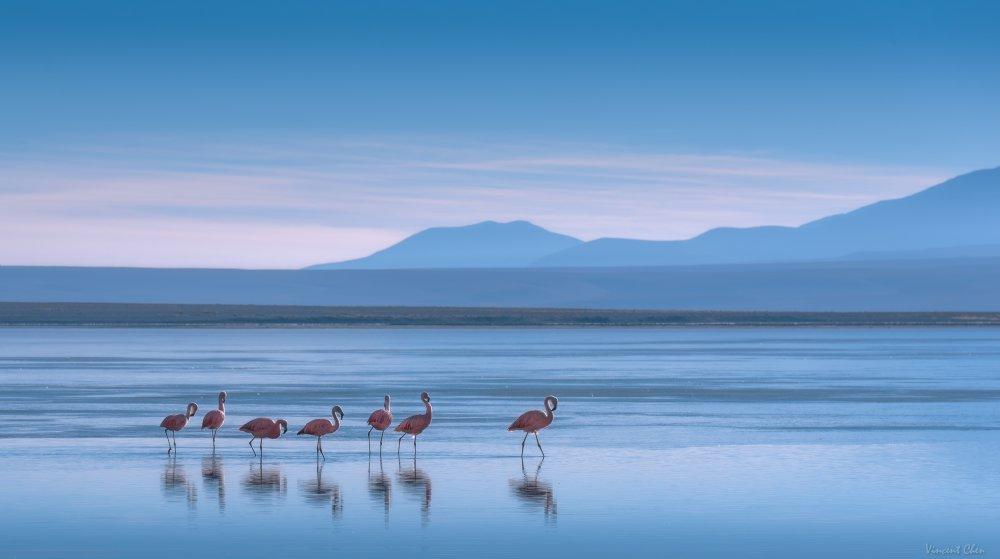 Fotokonst Flamingoes