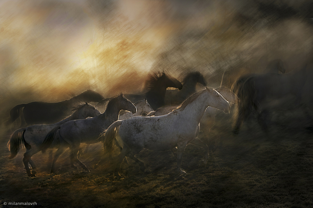 Fotokonst Herd