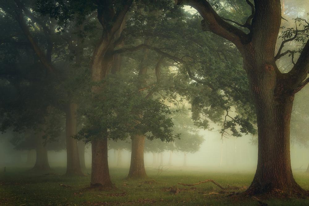 Fotokonst Mystical Moments