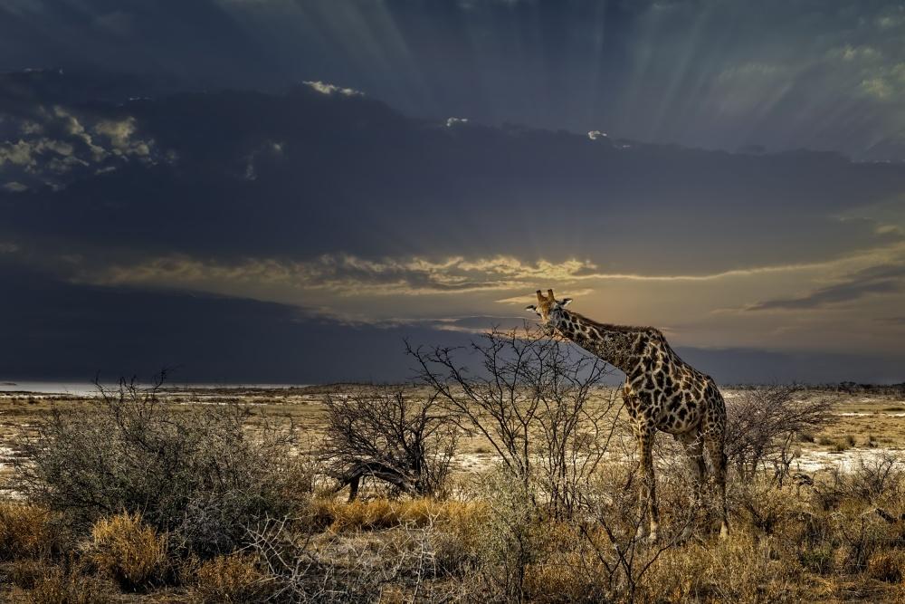 Poster sunrise in Etosha NP