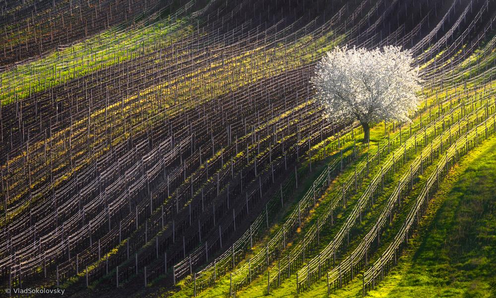 Fotokonst Strings of spring