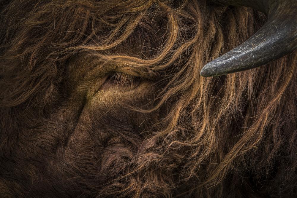Fotokonst redhead