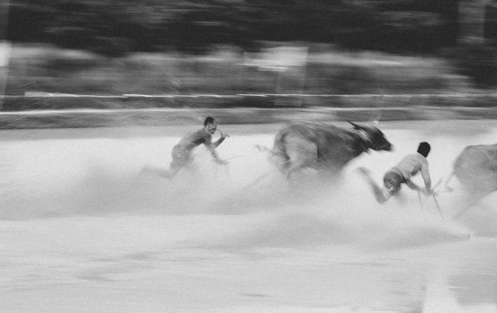 Fotokonst Buffaloes running festival No.2