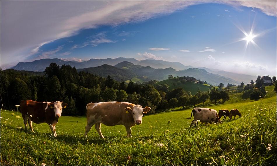Cliché Alpine Paradise
