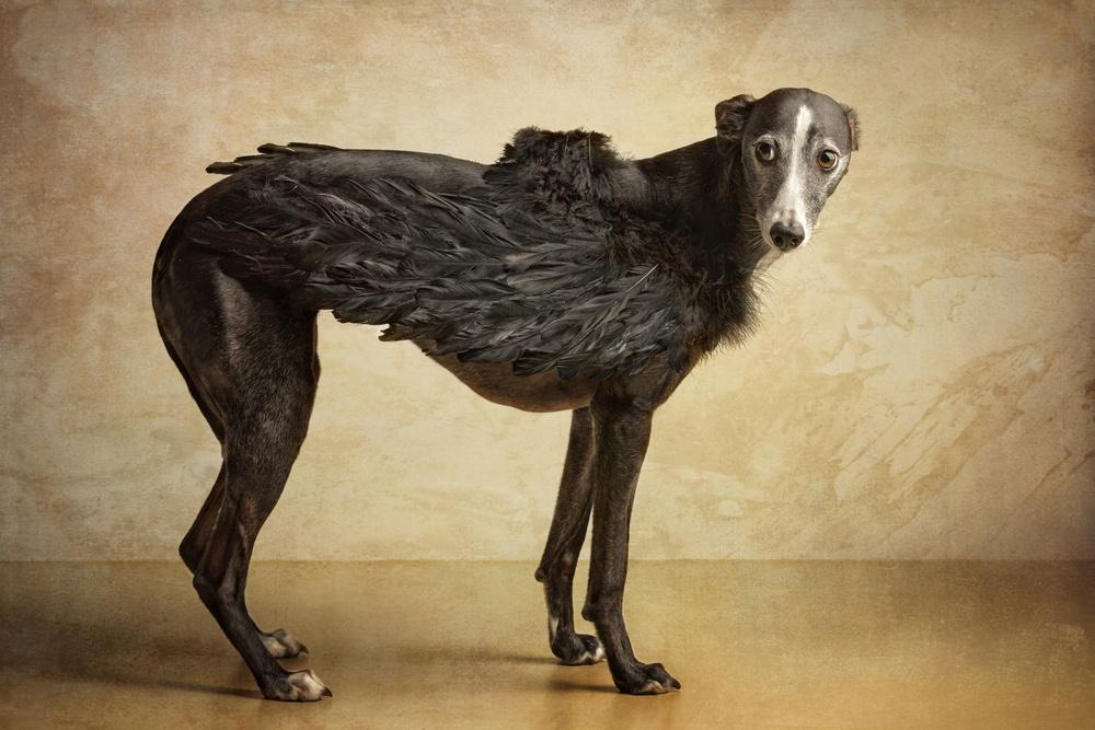 Famous Dog Photography | www.pixshark.com - Images ...